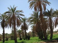IMG_4193 (motazabdelazeem   ) Tags: sudan rivernile     northernsudan    alkarafab