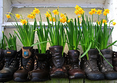 A Touch of Spring (Craig Hannah) Tags: flowers green leather yellow walking happy spring shoes village boots daffodil flowerpot oldham greenfield pennine rambling oldboots saddleworth 2016 greatermanchester westriding walkingboots craighannah noveluse