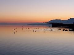 Lac de Neuchtel (Histoires de tongs) Tags: voyage trip travel travelling schweiz switzerland europe suisse roadtrip adventure explore visiting visite roundtheworld discover aventure tourdumonde