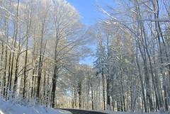 Tief verschneit (ivlys) Tags: road schnee trees snow nature germany deutschland bäume allemagne rhön mittelgebirge strase lowmountainrange ivlys