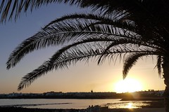 Palm tree sunset (simonturkas) Tags: travel sun beautiful amazing spain relaxing sunny lanzarote wanderlust incredible canaryislands
