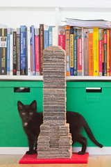 IMG_3029 (BalthasarLeopold) Tags: pet cats pets animal animals cat blackcat mammal kitten feline dof kittens felines blackcats indoorcat dephtoffield scratchpost