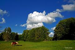 Petite scne Franc-Comtoise (1) (didier95) Tags: cheval vert bleu ciel nuage paysage campagne blanc franchecomt doubs franchecomte passonfontaine
