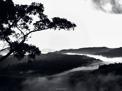Amanhecer pelas montanhas (Sunrise in the mountains) (CaiU) Tags: wood morning blackandwhite cloud white mountain black tree nature forest woodland landscape freedom view ar natural natureza free vale valley nuvens monte holt arvore colina montaa floresta hollow montanhas puro manh combe
