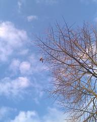 #shotonmylumia #shotonlumia #lumia735 #thelumians #nofilter #tree #trees #sky #bluesky #winter #leaves #deadwood #branches #nature #tree_brilliance #loves_united_trees #hugs_for_trees #vivonatura (simoneaversano) Tags: trees winter sky tree nature leaves branches bluesky deadwood nofilter instagram ifttt shotonmylumia shotonlumia lumia735 thelumians vivonatura hugsfortrees lovesunitedtrees treebrilliance