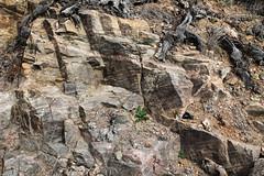 psms00 (srosscoe) Tags: texas geology schist metamorphic masontx hsugeology