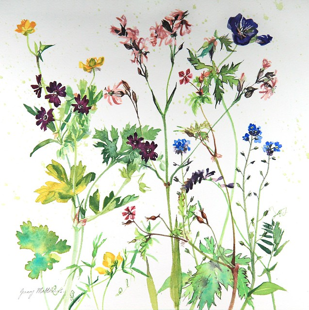 Mathews, Jenny: 'Summer Wild Flowers'