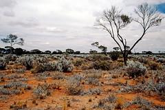 Real Australian Landscape (Outback) (Stefan Ulrich Fischer) Tags: travel red tree 35mm bush sand desert outdoor oz australia slide soil scanned outback analogue southaustralia downunder kodakektachrome minoltaxd7