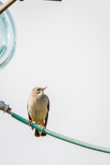 IMG_9504 (alex_kan222) Tags: bird birds canon eos 400 ef 56 760d