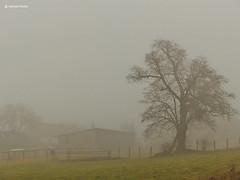 Nebellandschaft (GerWi) Tags: sky house tree nature fog nebel outdoor natur wiese himmel haus baum acker