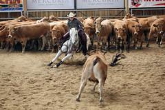BJ1A4833 (yoann coin) Tags: en horse france western cutting bons equitation ccha chablais ncha charmot