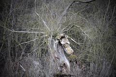Pgase (Gremine) Tags: horse tree nature strange canon cheval fantastic arbre bois tronc monstre fantastique 2875 mysterieux