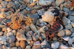 Seashore gems