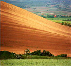 Blooming bushes (Katarina 2353) Tags: film landscape spring nikon europe serbia fields vojvodina srbija katarinastefanovic katarina2353