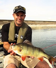 Perch1 (TheLureBox) Tags: perch pike zander pikefishing perchfishing lurefishing zanderfishing predatorfishing