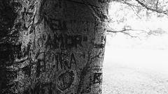 So Paulo (VNCISS) Tags: brazil white black tree love nature brasil amor natureza meu ibirapuera paulo tronco rvore so