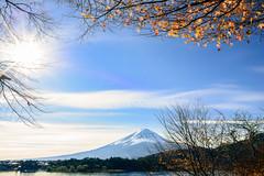 Morning Mt. Fuji & Maple  in Japan yamanashi prefecture .Lake Kawaguchi      DSC_5769-3 (Ming - chun ( very busy )) Tags: road travel light mountain lake tree japan leaf maple nikon colorful 28mm   nikkor f18     mtfuji d800   28mmf18        traveljapan   yamanashiprefecture       nikon28mmf18 nikon28mm18   f1828mm
