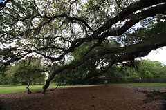 Canon206472 (godrudy6661) Tags: neworleans audubonpark treeoflife oaktrees