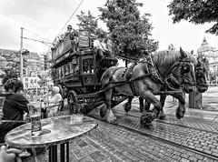 Wild West (Jan Kranendonk) Tags: horses coach europe belgium belgie antwerp paarden koets
