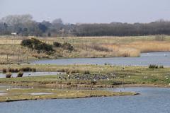 North Cave Wetlands (nataliemarchant) Tags: yorkshire eastyorkshire yorkshirewildlifetrust northcavewetlands