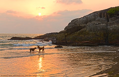 """A WIFE IS A WIFE, IN ROMANTIC EVENINGS OR TURBULENT WATERS... !"" (GOPAN G. NAIR [ GOPS Creativ ]) Tags: sunset dog beach photography evening wife romantic gops gopan gopsorg gopsphotography"