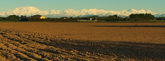 From the fertile plain... (Marco MCMLXXVI) Tags: morning travel italy mountains alps texture tourism colors field skyline montagne plane sunrise landscape countryside early alba outdoor dom sony country ground ridge soil piemonte land monterosa plain alpi lombardia mattina alphubel pianura simplon mischabel summits padania padana insubria weissmies stralhorn taschhorn nex5 mischebel