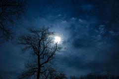 """Soft Air Aloft"" (Melissa June Daniels) Tags: longexposure nightphotography light sky cloud moon tree nature night clouds landscape nightscape nightsky lunar landscapeastrophotography cloudsstormssunsetssunrises melissajdaniels melissajdanielsphotography melissajunedaniels thenymphandthebee"
