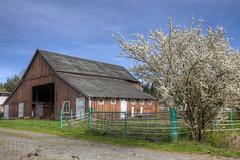 Barn - Vancouver Island, British Columbia, Canada (Toad Hollow Photography) Tags: wood old canada detail texture barn rural bc britishcolumbia farm painted vancouverisland weathered hdr bucolic patina