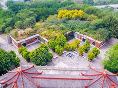 Look down from the top of the tower (yaokailun) Tags: camera color tree green tower nature beautiful weather yellow architecture photography nice view overlook lightroom