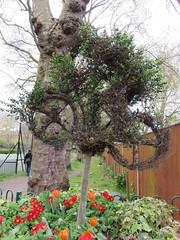 UK - London - Lambeth - Archbishop's Park - Topiary cyclist (JulesFoto) Tags: uk england london topiary cyclist lambeth ramblers archbishopspark capitalwalkers