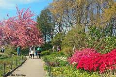 Fort Tryon Spring (Trish Mayo) Tags: spring azaleas tulips cherryblossoms washingtonheights forttryonpark nycparks thebestofday gnneniyisi