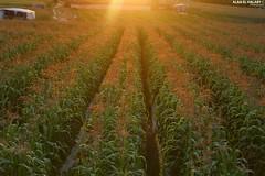 Northern Gaza city (TeamPalestina) Tags: sunset sky sun sunrise canon landscape landscapes photo am amazing nice nikon photographer natural sweet live palestine comfort sunrays gaza beautifull palestinian  landscapecaptures