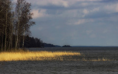 Grainy noon (Joni Mansikka) Tags: trees lake nature water clouds suomi finland landscape spring outdoor horizon shore lakescape pyhjrvi ylne