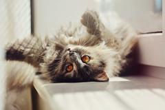 M (iliketobeweird) Tags: windows cats nature animals cat feline funny