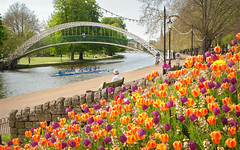 Colorful Tulips on River Ouse Embankment, Bedford, UK (ukgardenphotos) Tags: uk england bedford tulips bedfordshire eng riverembankment