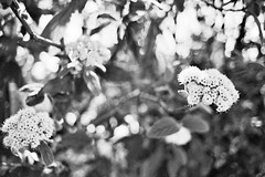 Ilford XP2 4-16 21 (LanceAdkinsPhotography) Tags: birthday street friends party portrait blackandwhite plants sun white black tree film contrast forest photo long exposure walk cincinnati group streetphotography down run grill xp2 flare ilfordxp2 ilford buiding ilfordxp2super400 super400