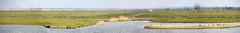 IMG_8424+25+26+27+28+29+30 the wilderness of Oostvaardersplassen (pinktigger) Tags: blue panorama holland green water netherlands dutch animals landscape geese outdoor nederland wilderness flevoland oostvaardersplassen naturalreserve vastity
