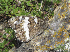 mimetic butterfly (Marco Ottaviani on/off) Tags: nature canon butterfly insects natura mimicry farfalla insetti insecta mimetismo papilionidae hipparchia hipparchiafagi marcoottaviani