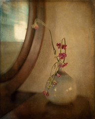 It's Over (SLEEC Photos/Suzanne) Tags: stilllife flower reflection lensbaby mirror vase pottery textured windowlight flypaper budvase antiquedresser shadowhousecreations