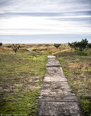 Path To The Sea (mjardeen) Tags: green beach grass oregon landscape concrete seaside outdoor path decay f14 or sony sidewalk konica a7ii clouts 57mm nikcolorefex landscapesshotinportraitformat a7m2