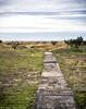 Path To The Sea (mjardeen) Tags: green beach grass oregon landscape concrete seaside outdoor path decay f14 or sony sidewalk konica a7ii clouts 57mm nikcolorefex landscapesshotinportraitformat a7m2