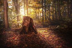 I was a tree (naddesigns) Tags: world autumn light red orange sun toronto ontario tree green fall yellow canon photography zoo log stem dof pov filter scarborough rays polarization
