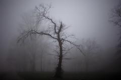 Silhouettes in the mist (Sunsword & Moonsabre) Tags: park trees light mist plant tree silhouette fog outdoors ada twilight nikon europe dusk branches serbia foggy belgrade nikkor beograd 35f2 ciganlija d700 nikonfx