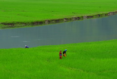 Green Blue Green (Py All) Tags: nepal plant green water field plante river landscape asia eau outdoor vert rivire asie paysage pokhara extrieur champ npal