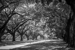 The plantation (robertogoni) Tags: bn charleston estadosunidos carolinadelsur ciudadeslugares