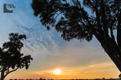 (Dhiren Adatia) Tags: trees sunset sky clouds sillouette mandurah sillouhette
