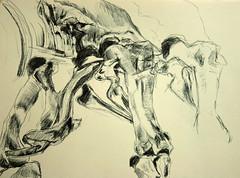 anatomische Klarung Becken T.Rex (Alemwa) Tags: berlin kreuzberg natur sketching trex tyranosaurusrex zeichnung skelett bung becken zeichnen prparat museumfrnaturkundeberlin alemwa formerfassung formklrung