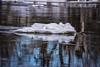 22 January 2016 (runningman1958) Tags: blue reflection water nikon 365 bluehue waterreflection floatingice rideauriver 365dayproject d7200 nikond7200