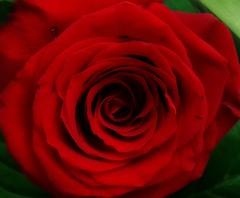 """""""El nombre de la rosa"""" Umberto Eco ( Montse;-))) Tags: rosa cultura umbertoeco ensayos legado novelas crtico elnombredelarosa elmundodelaculturaestdeluto"""