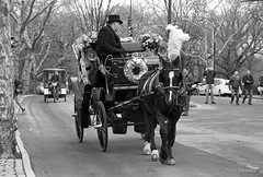 Central Park, December 2015 (ocarmona) Tags: nyc horses bw film canon eos centralpark trix manhatten 400asa 1n